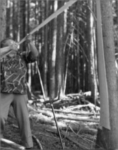 Ella Grant, 1982, stripping cedar bark.